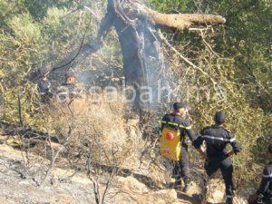 إسبانيا تتهم المغرب بإحراق غابة غوروغو