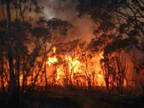 خطير ... إسرائيل تقول إن حرائق الغابات التي تجتاحها اليوم متعمدة