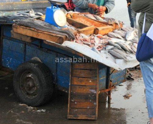 هلع المهربين يخفض أسعار السمك