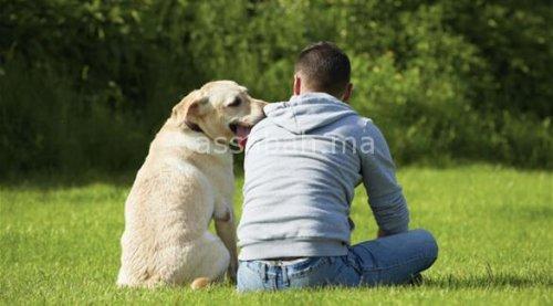 علماء: الكلاب تفهم البشر