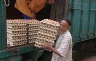 إنتاج بيض الاستهلاك بلغ 5.5 مليار وحدة في 2017