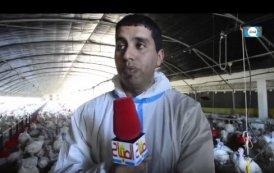 فيديو .. مراحل تربية الدواجن بالمغرب
