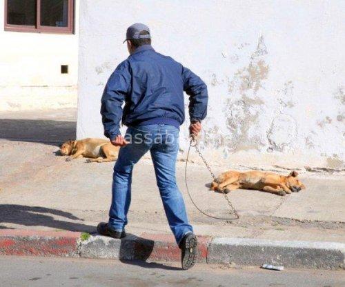 سلطات الجديدة تعدم 100 كلب