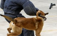 كلاب وسيوف ورصاص في مواجهات مع الأمن