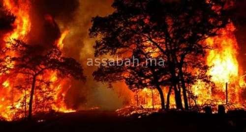 حريق بالقصر الصغير يأتي على 12 هكتارا من الغابات