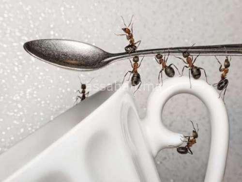 مكونات بسيطة لمحاربة النمل