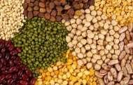 إنتاج 96 مليون قنطار من الحبوب في الموسم الحالي
