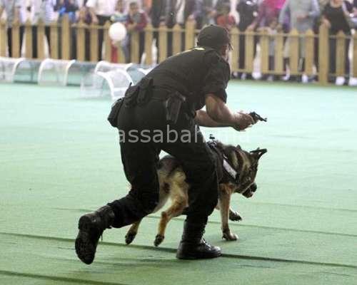 اعتقال مجرم ببرشيد بعد مطاردة مثيرة