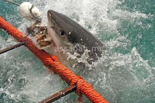 "Photo of "" النيكرو "" يتلف السمك بالناظور"