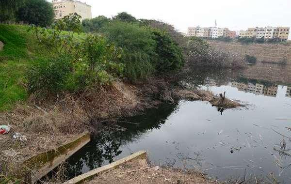بحيـرة الفـردوس ... جريمـة بيئيـة
