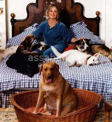 بريجيت باردو  تدافع عن كلاب المغرب - جريدة الصباح