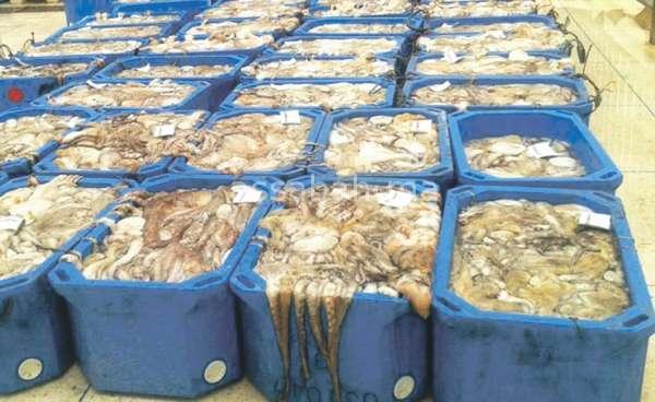 تطبيق معلوماتي لمحاصرة مهربي الأسماك
