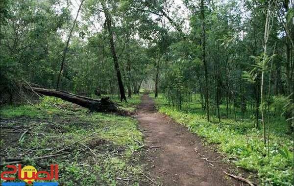 غابة الهرهورة ... فضاء بيئي صحي