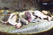 الحبس لصيادي الغزلان بتيزنيت