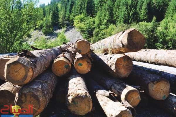 مافيا الخشب تجتث غابات الأطلس